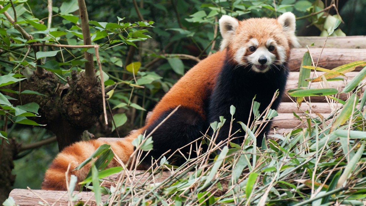 Pandas-12
