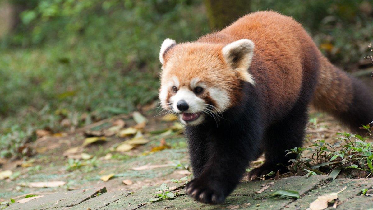 Pandas-13