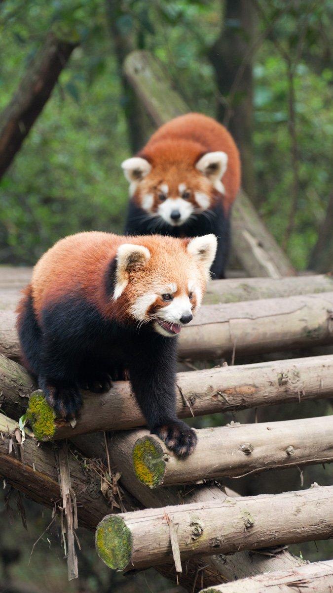 Pandas-18