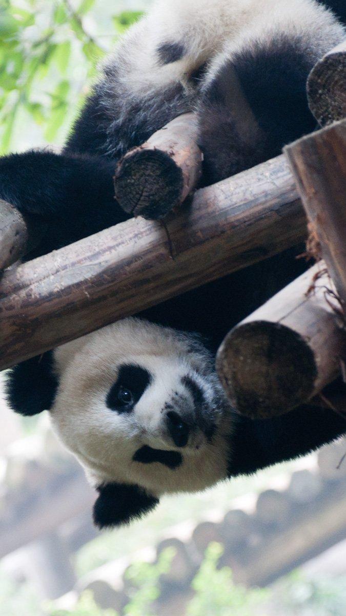 Pandas-21