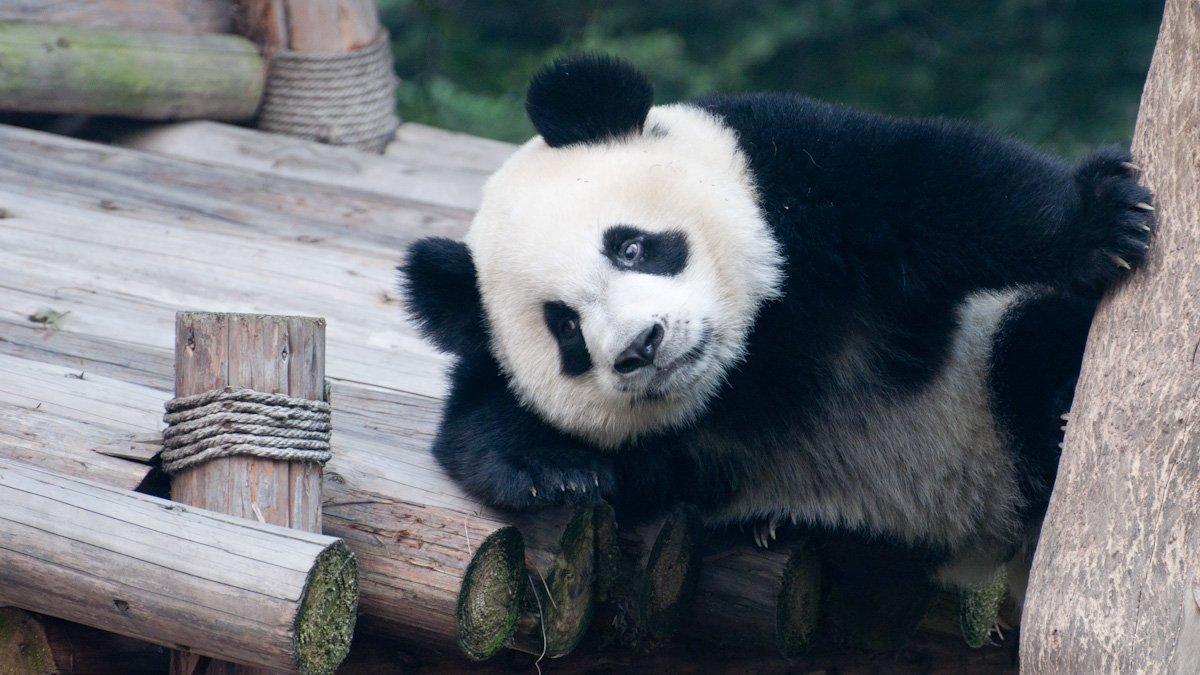 Pandas-22