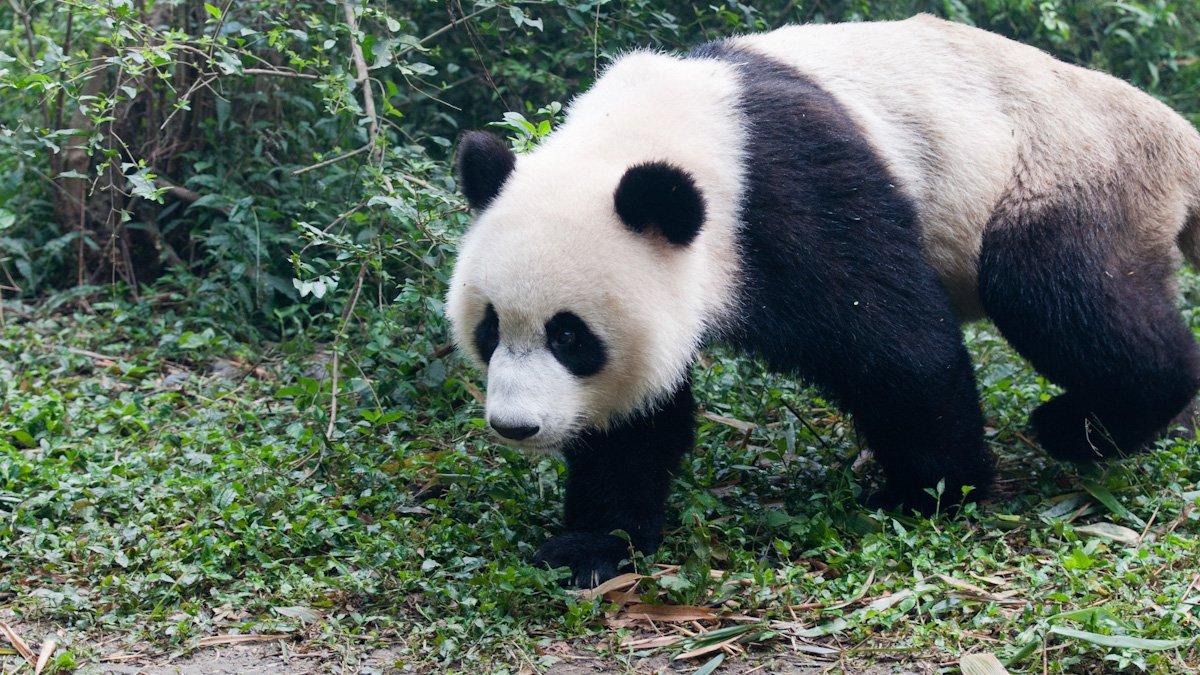 Pandas-3