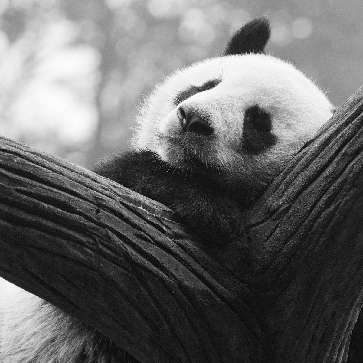 Pandas-4