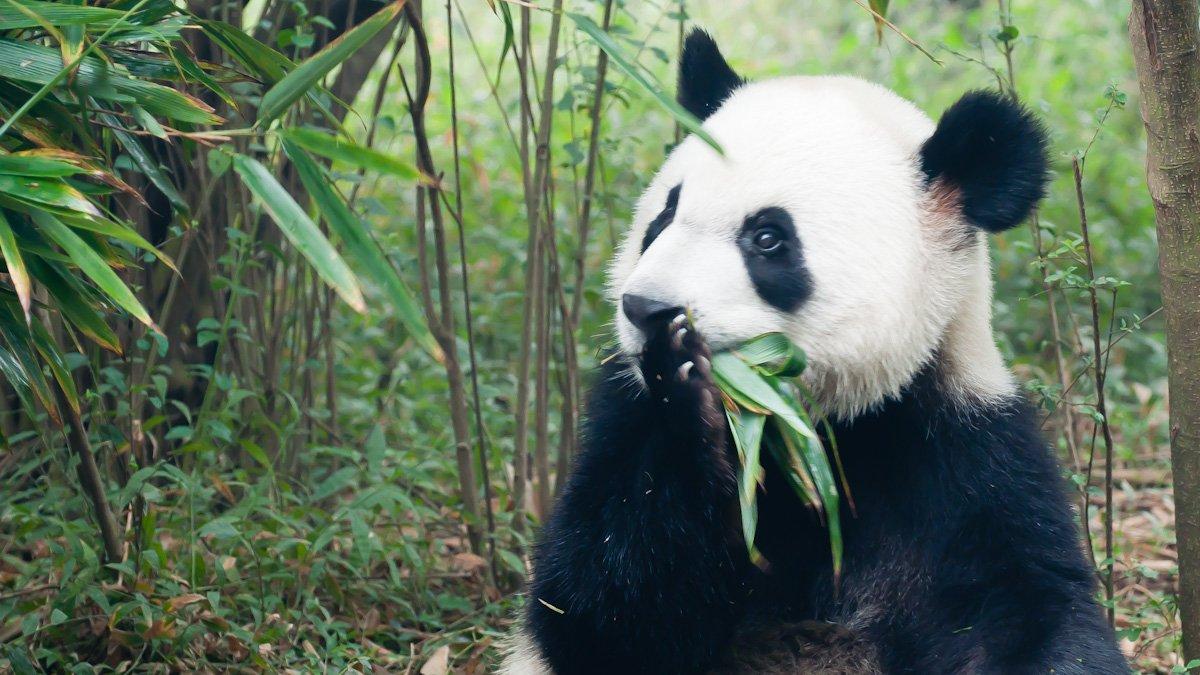 Pandas-8