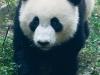 Pandas-1