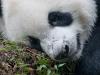 Pandas-10