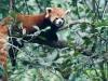Pandas-16