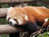 Pandas-17