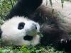 Pandas-2