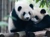 Pandas-20