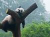 Pandas-5