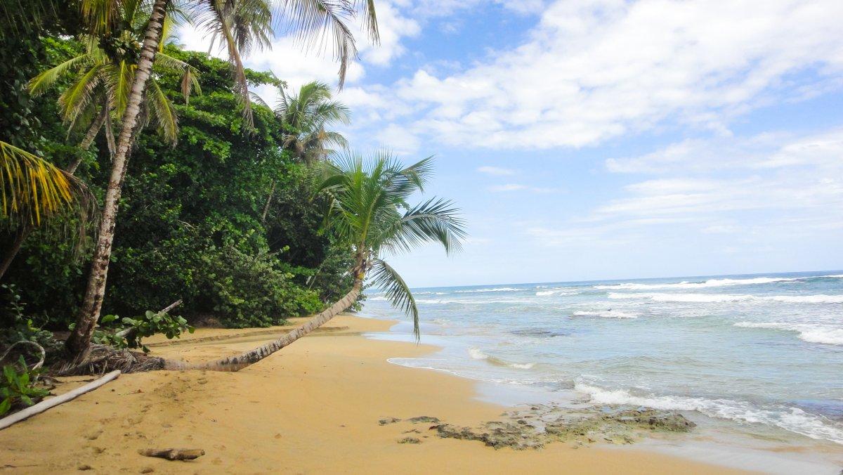 Puerto Viejo Jungle Beach